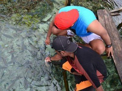 Fish feeding trip Raja Ampat