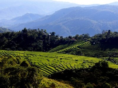 Mano rice terrace - Flores exploation