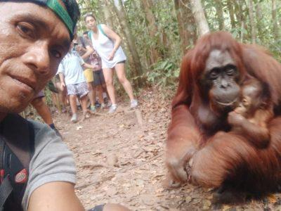 Orangutan Borneo