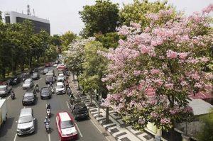 Surabaya city tour